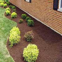 Bushes in Mulch